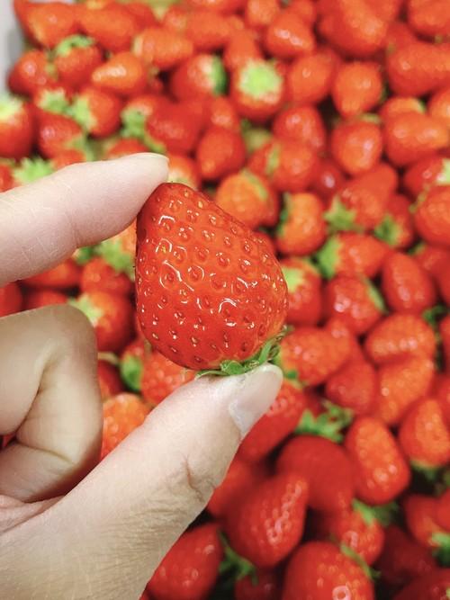 小粒苺 1.2kg