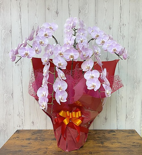 J0600) 胡蝶蘭5本立ち2Lサイズ ピンク