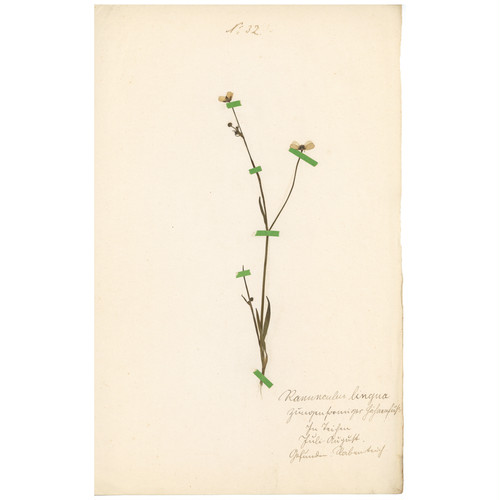ドイツの古い植物標本 122