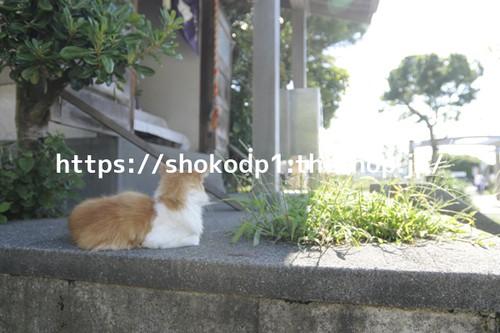 遠くをみつめる猫_dsc0202