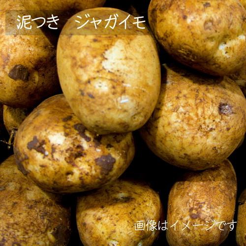 8月の朝採り直売野菜 : ジャガイモ 約600g 8月の新鮮夏野菜 8月10日発送予定