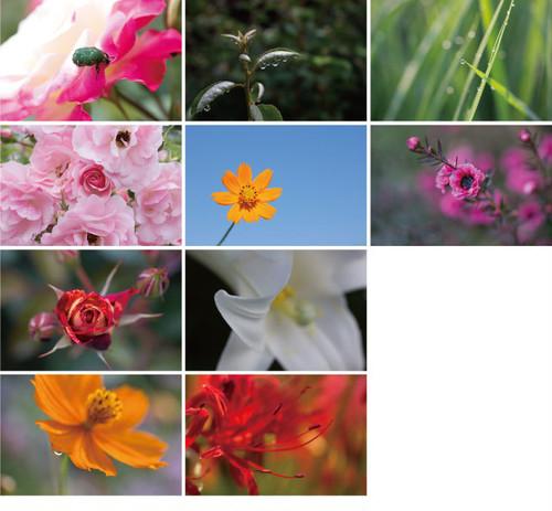 花と緑のポストカード2013(10枚セット)