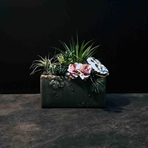 多肉植物square × ブルックリンスタイル