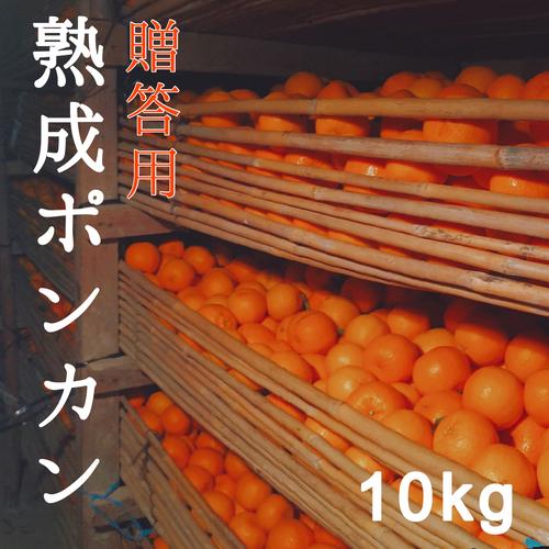 送料無料 熟成ポンカン贈答用10kg 熊本県産