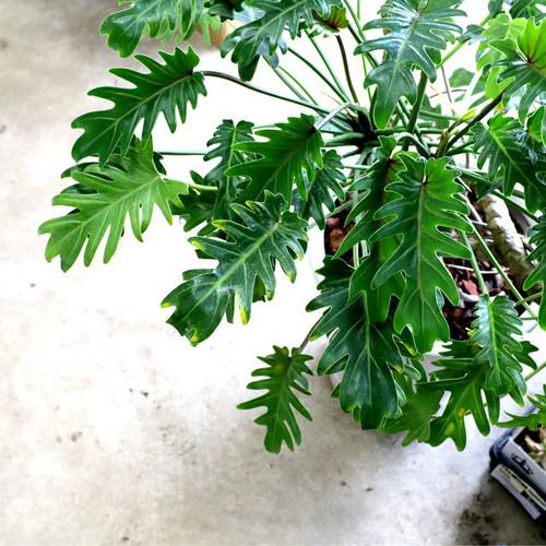 熱帯っぽい植物