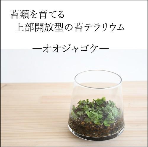 【苔類を育てる】小さな苔の森 台形ポット オオジャゴケ