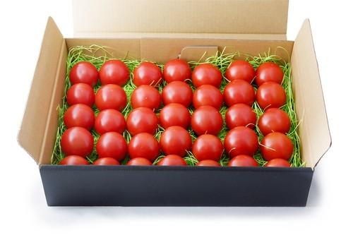 中玉トマトセット