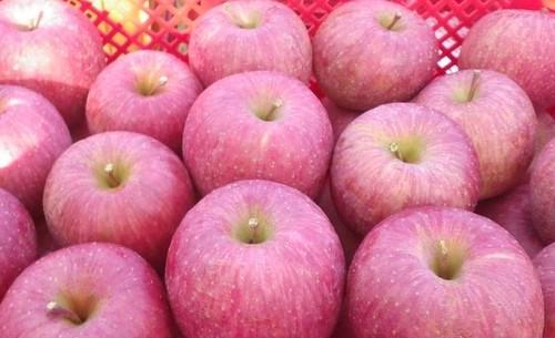 樹上完熟りんご・サンふじ (秀・3kg・9~12玉)※12月上旬発送
