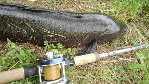OUTBURST SNAKEHEAD-76H JAPAN LIMITED