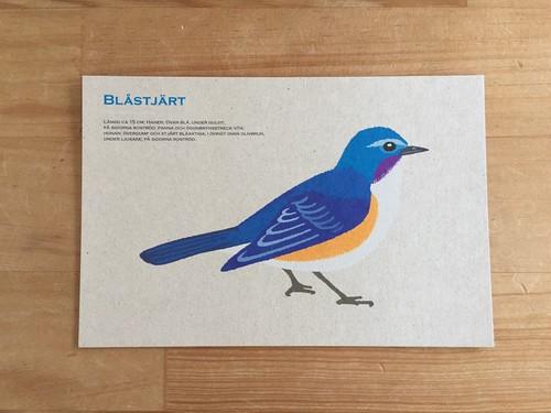 イラストポストカード|BPB-05