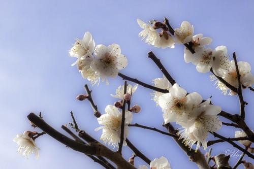 Flower-41