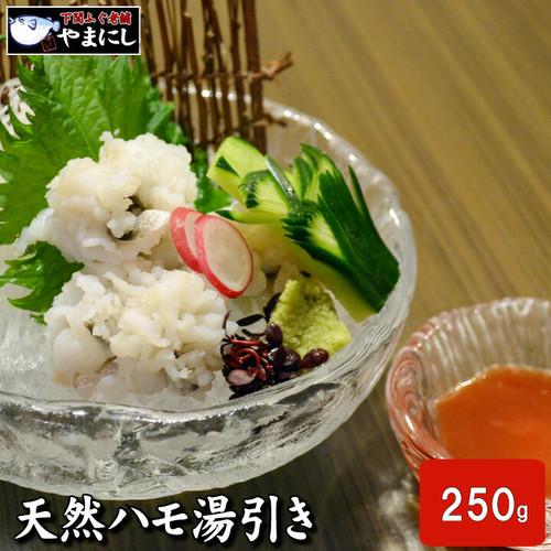 山口県産 天然活けハモ湯引き2-3人前(15切・250g・梅肉付き)
