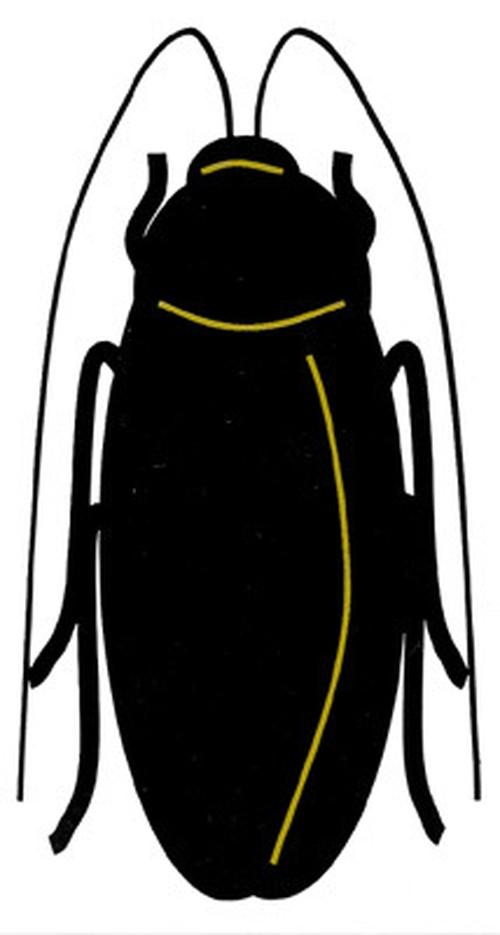 ゴキブリ ステッカー(カッティングブラック)