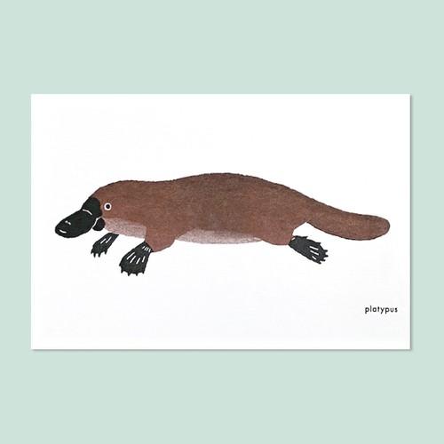 カモノハシのポストカード