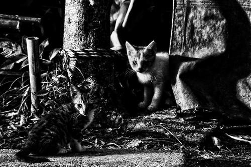 STREET CATS-102