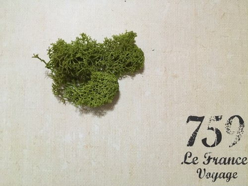 アイルランドモス スプリンググリーン 2g