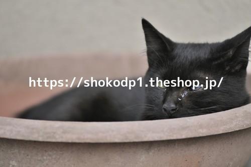鍋猫_DSC0941