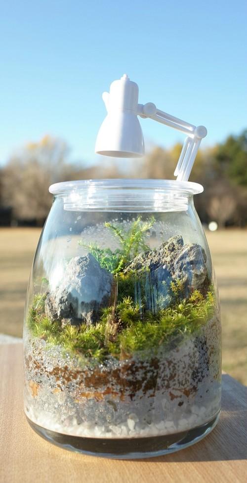 苔ボトル Kokebottle Moss bottle ライト付きセット 006