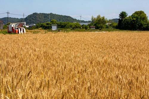 しらさぎ小麦オーナー