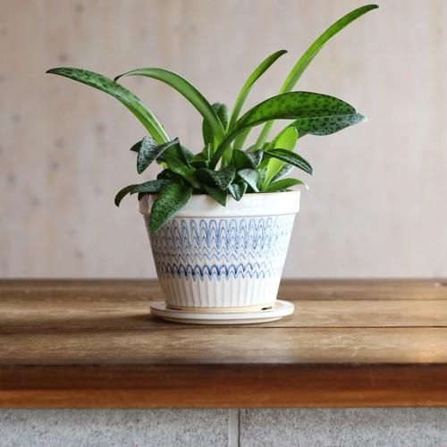 Paecock pot (M)
