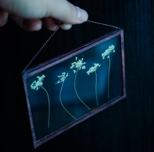 植物絵画:ドライフラワー/押し花『レースフラワー』