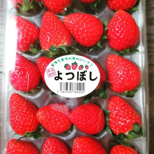 いちご(長野県産、よつぼし)