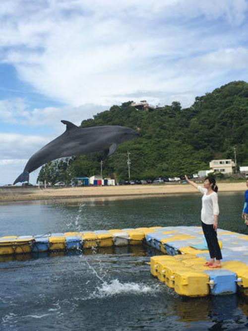 【地元のおすすめスポット】イルカと遊ぶ!「サポーターズチケット」【限定販売】日本ドルフィンセンターの商品画像4
