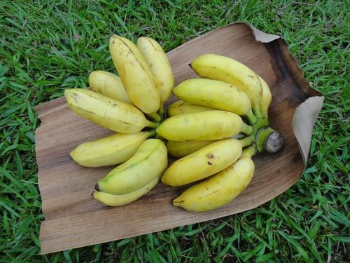 9月頃販売開始★ 屋久島産無農薬バナナ3kg