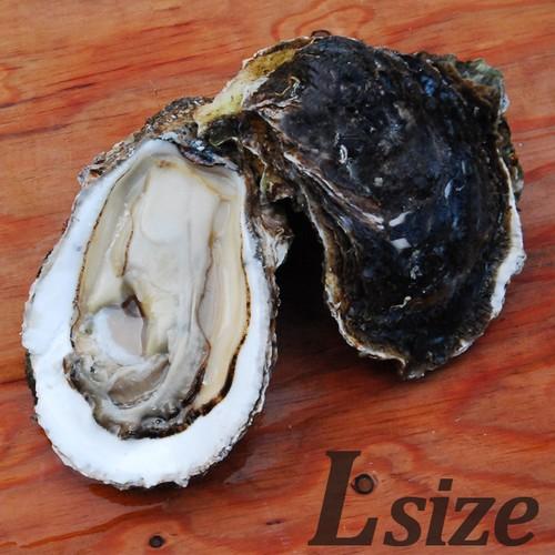 【朝どれ直送】養殖岩牡蠣Lサイズ2個入 加熱用