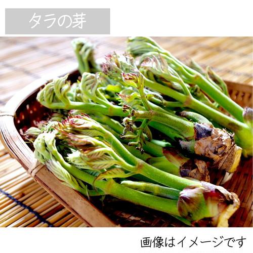 4月の山菜 タラの芽 約50g 朝採り直売野菜 4月25日発送予定
