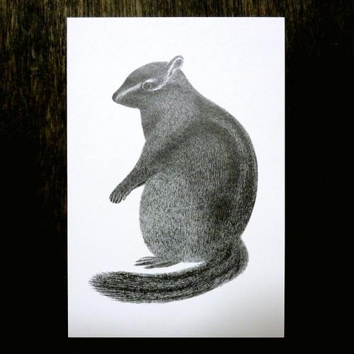 栗鼠のポストカード