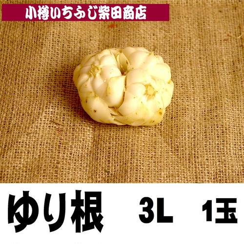 1玉 北海道産 ゆり根 3Lサイズ