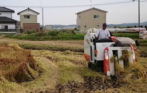 【コシヒカリ】田んぼアート彩米2kg 2018年10月収穫・無洗米