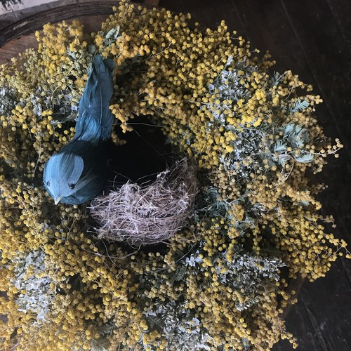 Dried  mimosa & statice wreath / L size  ( with Nest & bird) /(ドライミモザとスターチスリース Lサイズ / 小鳥と巣付き)