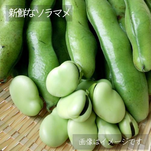 6月の朝採り直売野菜 : そらまめ 約400g 春の新鮮野菜 6月6日発送予定