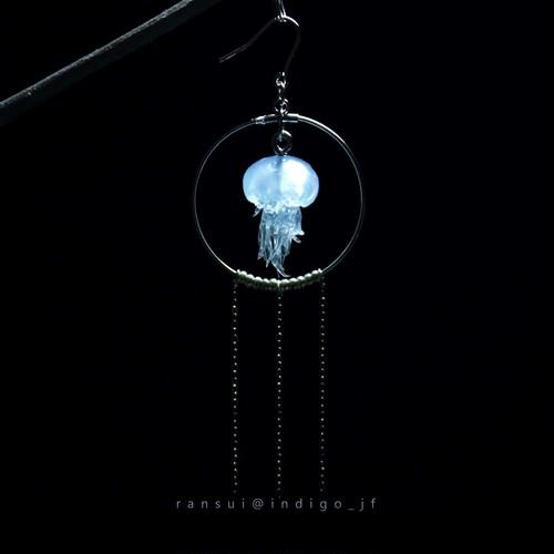 円環スナイロクラゲ