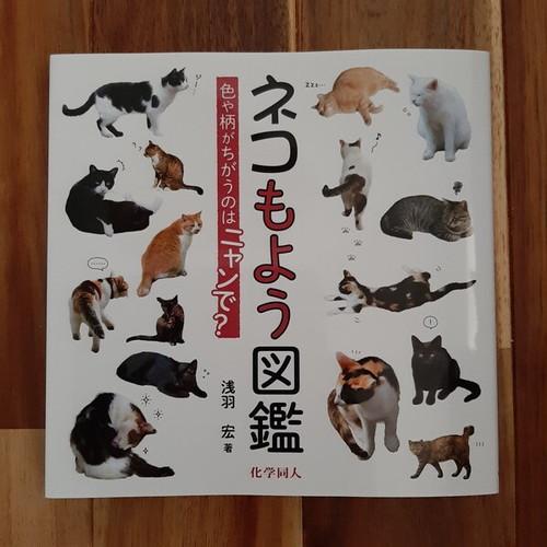 【新品】ネコもよう図鑑