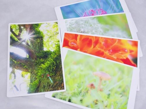 【ポストカード】小さな植物の世界