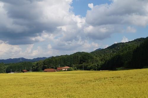 祝☆令和1年度産 山口県鹿野産 コシヒカリ30kg(玄米)