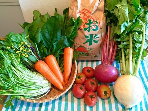 【C】お米(10kg)と季節のおまかせ野菜セット(産地直送!福島県白河市・関谷農園)