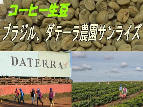 ブラジル ダテーラ農園 サンライズ(RA認証)のコーヒー生豆、300g×2袋=600g