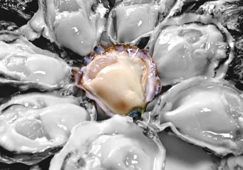 セカウマ=世界一うまい牡蠣を創ろう!支援(お取り寄せ)パッケージ