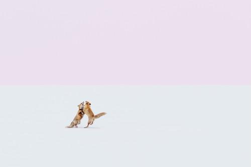 Fox Hug 2019