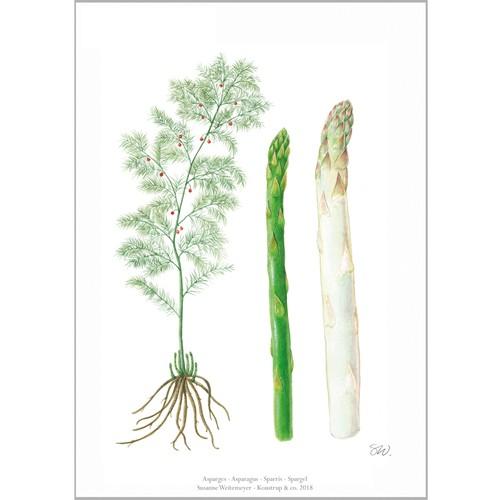 アート ポスター A4 サイズ KOUSTRUP & CO. - Asparagus アスパラガス