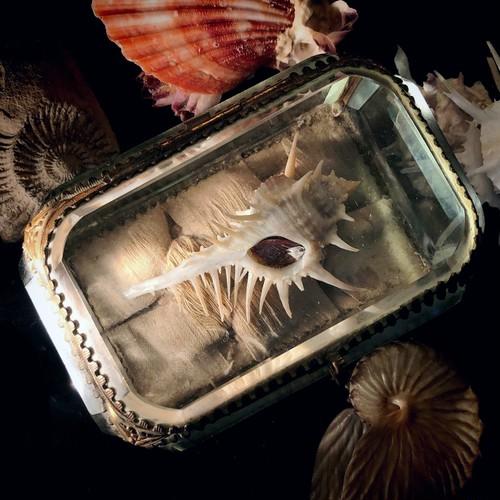 貝殻入りの宝石箱