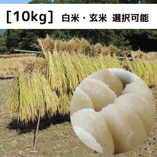 ☆新米☆【無農薬米】信里シナイモツゴ保全米【10kg】2020年産