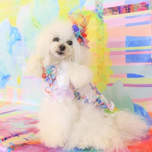 jibun-fuku DOG 【チューブドレス】 DOGB2018189