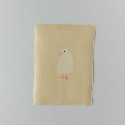 ポストカード 文鳥