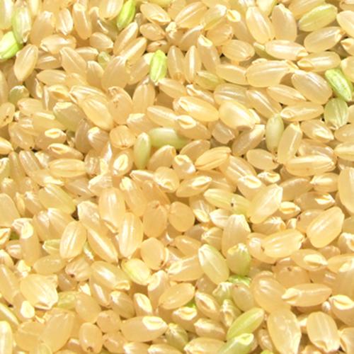 玄米3kg  南魚沼産・減農薬