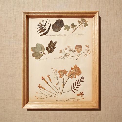 フランスアンティーク(1895) 植物標本フレーム 18SEPT-ASHF02